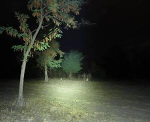 Die Leuchtkraft der Fenix PD35 Taschenlampe im Freien - LED Taschenlampen Test